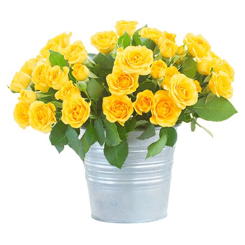 12 rosas en balde